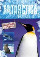Antarctica (Jones Grace)(Pevná vazba)