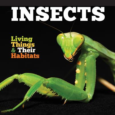 Insects (Jones Grace)(Paperback / softback)